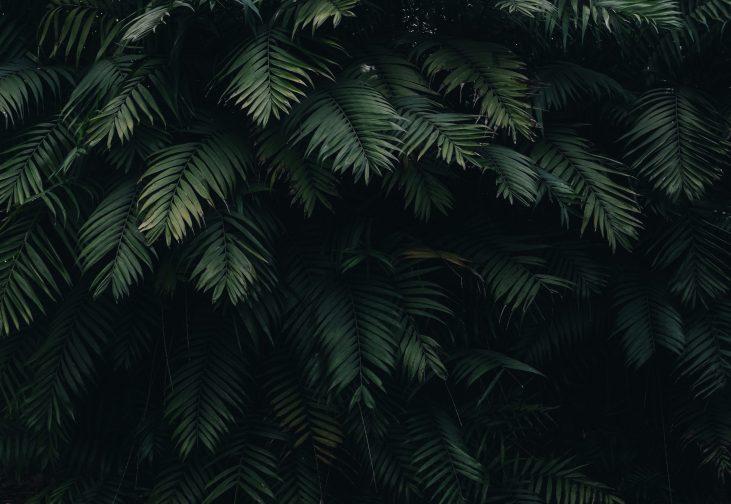Canva - Green Leaves